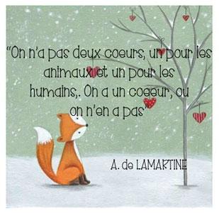 CS-02-2018-Sujet-Animaux-and-Co-de-Littlecat