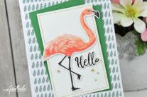 Com16 : Collection June  Hello Flamingo